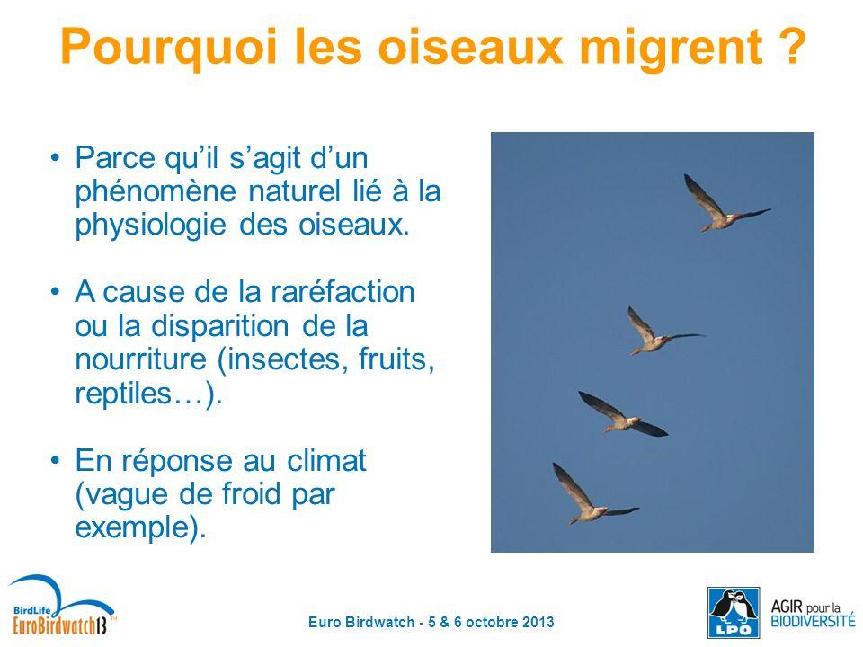 Euro Birdwatch - 5 & 6 octobre 2013 Pourquoi les oiseaux migrent ? Parce quil sagit dun phénomène naturel lié à la physiologie des oiseaux. A cause de