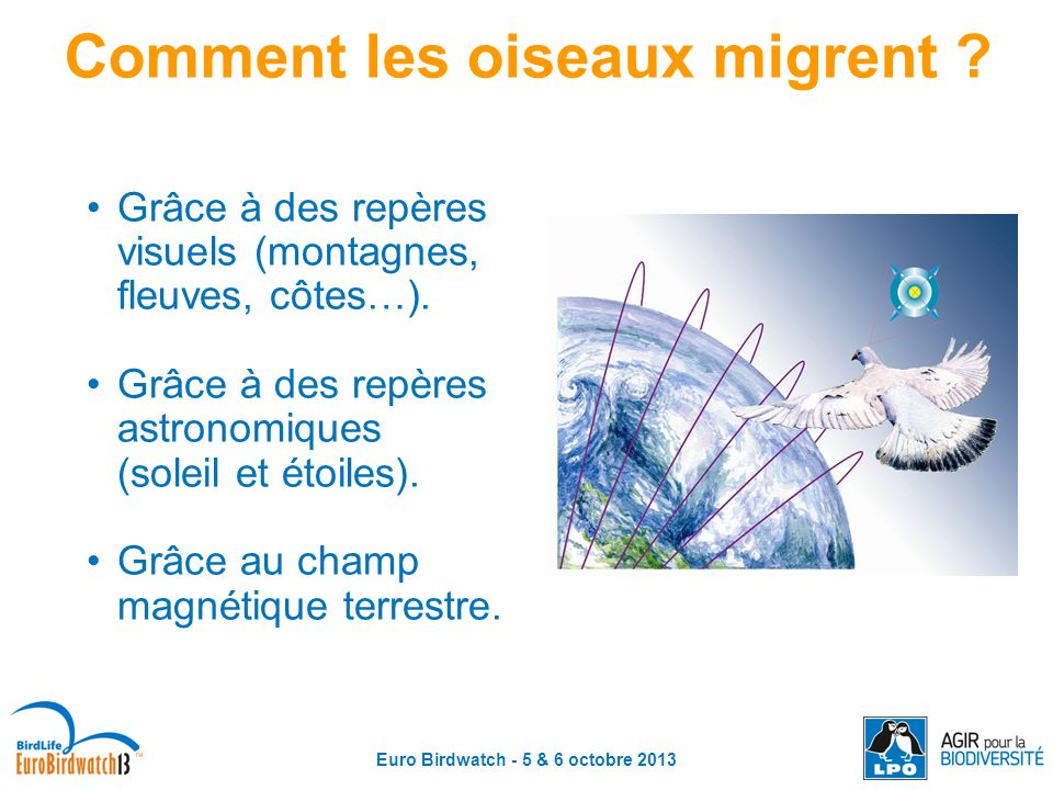 Euro Birdwatch - 5 & 6 octobre 2013 Comment les oiseaux migrent ? Grâce à des repères visuels (montagnes, fleuves, côtes…). Grâce à des repères astron