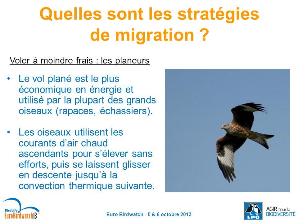 Euro Birdwatch - 5 & 6 octobre 2013 Quelles sont les stratégies de migration ? Voler à moindre frais : les planeurs Le vol plané est le plus économiqu