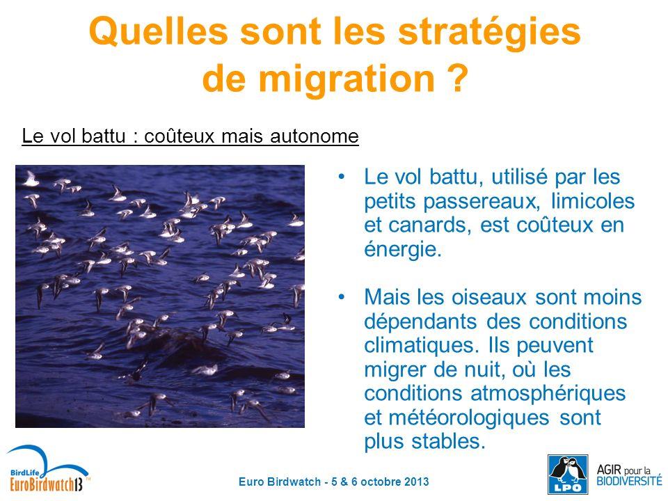 Euro Birdwatch - 5 & 6 octobre 2013 Quelles sont les stratégies de migration ? Le vol battu : coûteux mais autonome Le vol battu, utilisé par les peti