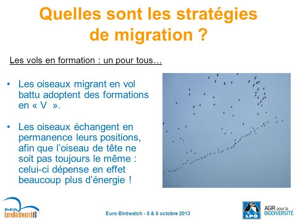 Euro Birdwatch - 5 & 6 octobre 2013 Quelles sont les stratégies de migration ? Les vols en formation : un pour tous… Les oiseaux migrant en vol battu
