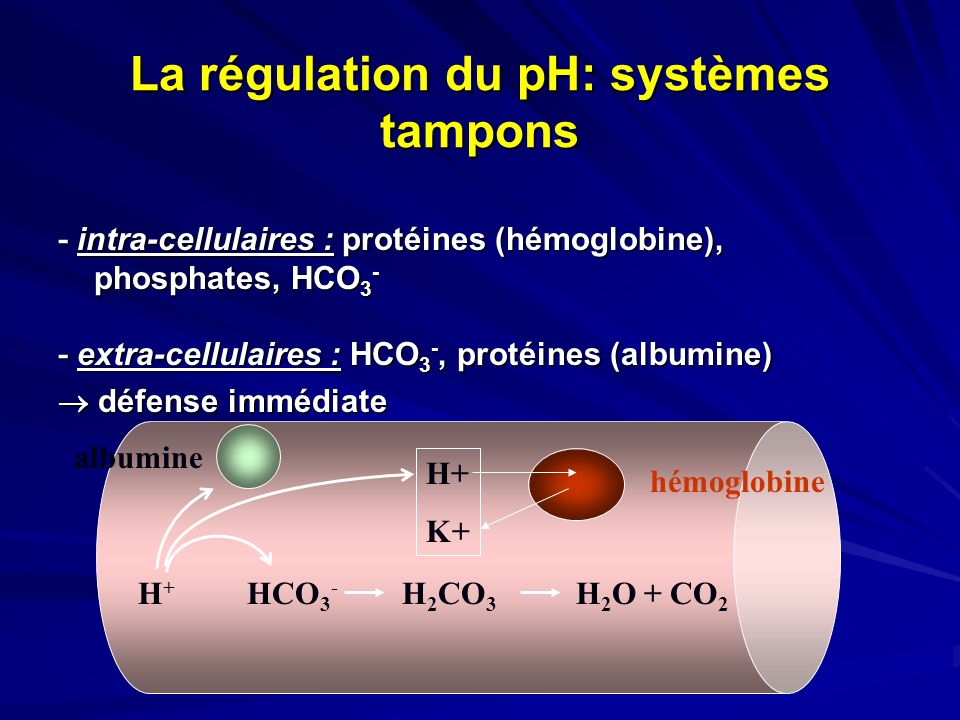 La régulation du pH: systèmes tampons - intra-cellulaires : protéines (hémoglobine), phosphates, HCO 3 - - extra-cellulaires : HCO 3 -, protéines (alb