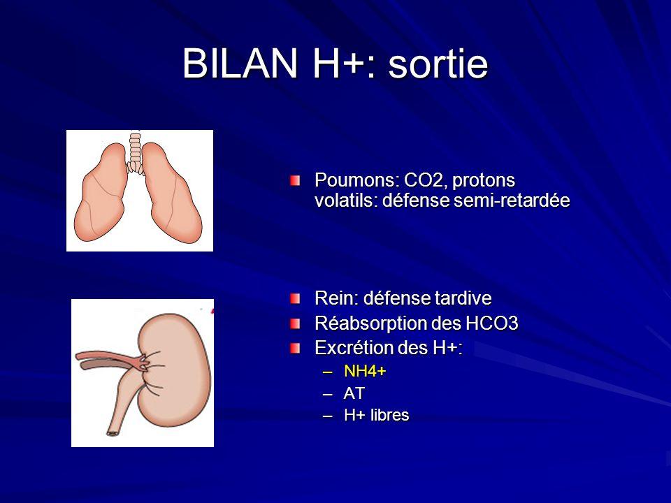BILAN H+: sortie Poumons: CO2, protons volatils: défense semi-retardée Rein: défense tardive Réabsorption des HCO3 Excrétion des H+: –NH4+ –AT –H+ lib