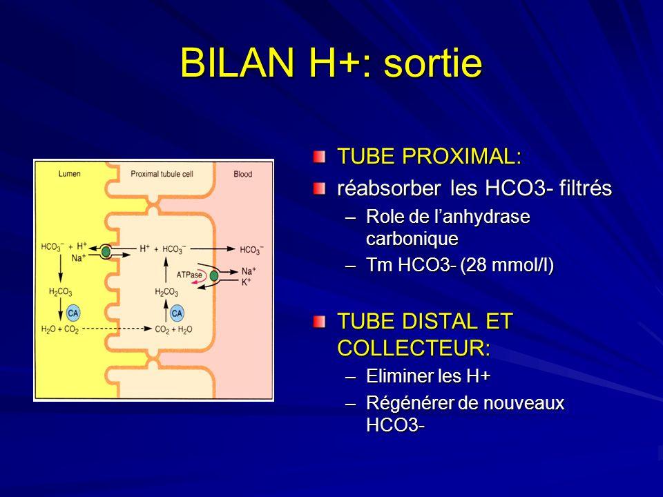 BILAN H+: sortie TUBE PROXIMAL: réabsorber les HCO3- filtrés –Role de lanhydrase carbonique –Tm HCO3- (28 mmol/l) TUBE DISTAL ET COLLECTEUR: –Eliminer