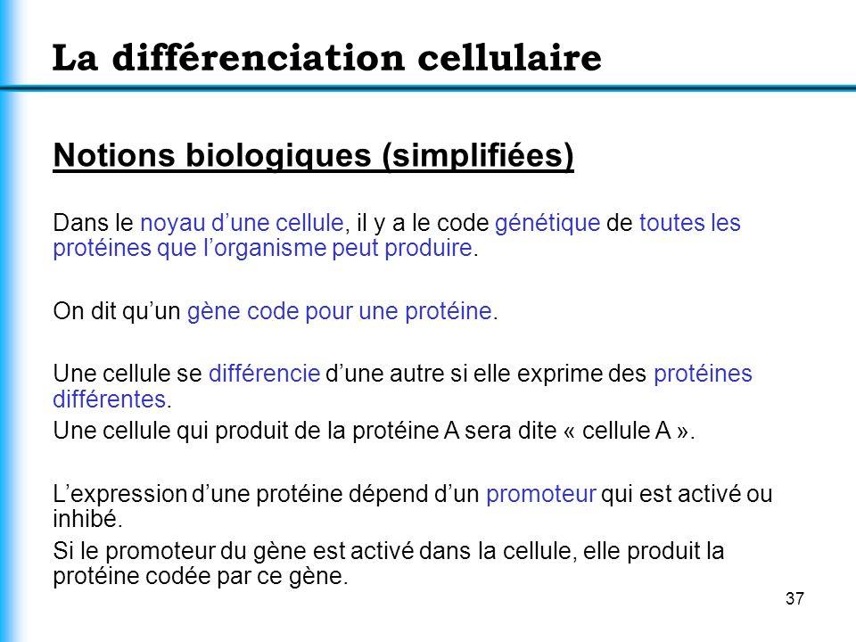 37 La différenciation cellulaire Notions biologiques (simplifiées) Dans le noyau dune cellule, il y a le code génétique de toutes les protéines que lo