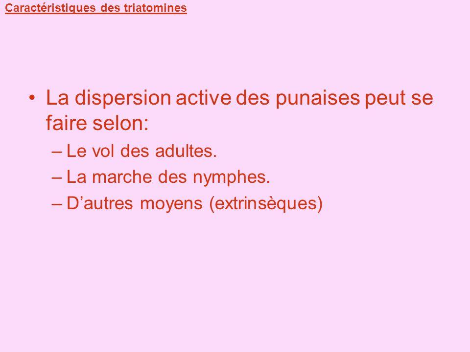 Caractéristiques des triatomines La dispersion active des punaises peut se faire selon: –Le vol des adultes. –La marche des nymphes. –Dautres moyens (