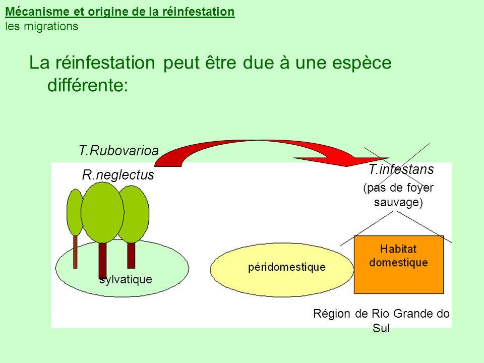 Mécanisme et origine de la réinfestation les migrations La réinfestation peut être due à une espèce différente: T.infestans T.Rubovarioa R.neglectus R