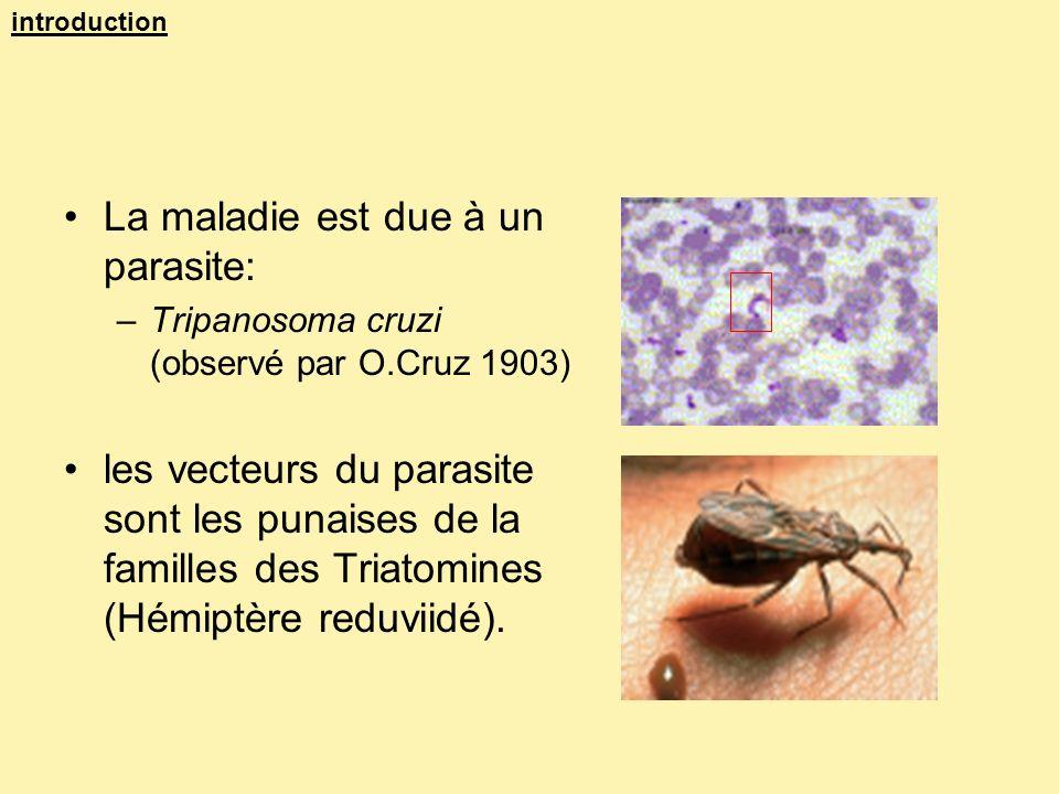 La maladie est due à un parasite: –Tripanosoma cruzi (observé par O.Cruz 1903) les vecteurs du parasite sont les punaises de la familles des Triatomin