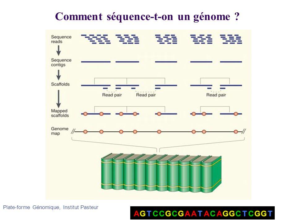 Plate-forme Génomique, Institut Pasteur Comment séquence-t-on un génome ?