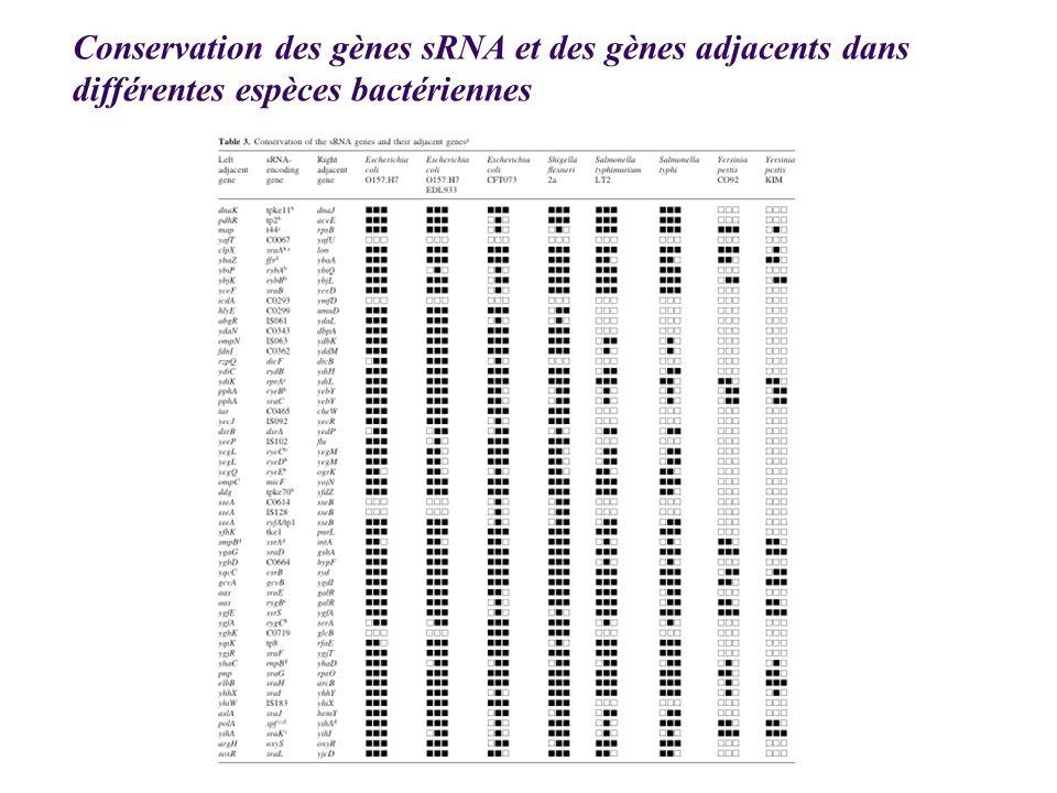 Conservation des gènes sRNA et des gènes adjacents dans différentes espèces bactériennes