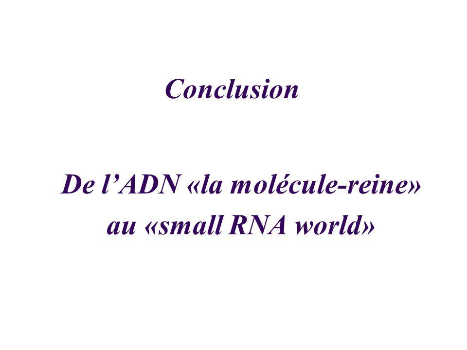 Conclusion De lADN «la molécule-reine» au «small RNA world»