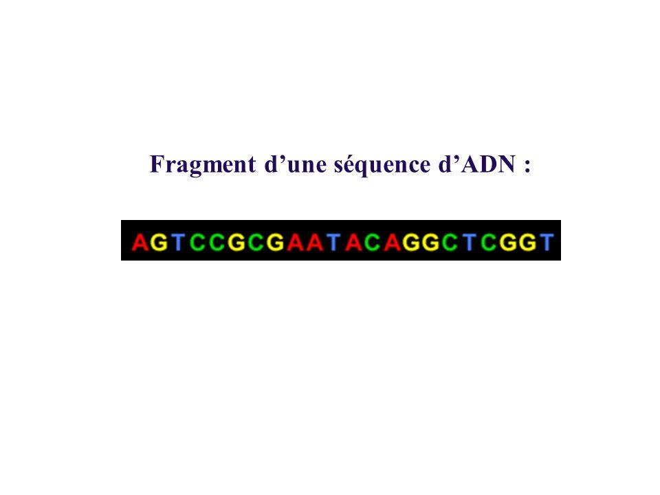 Fragment dune séquence dADN :