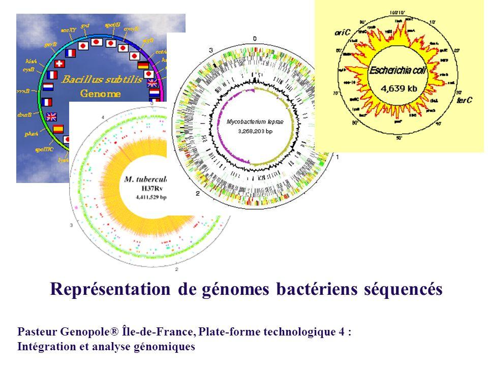 Pasteur Genopole® Île-de-France, Plate-forme technologique 4 : Intégration et analyse génomiques Représentation de génomes bactériens séquencés