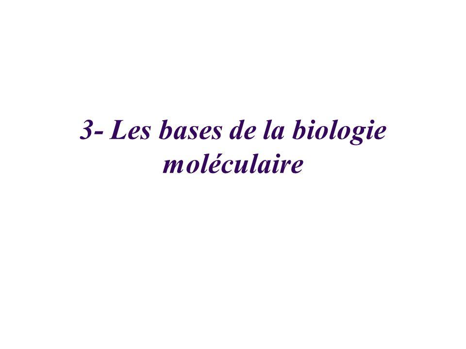 3- Les bases de la biologie moléculaire