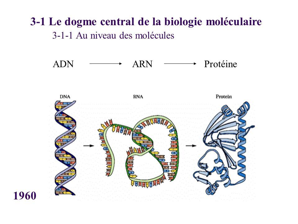 ADN 3-1 Le dogme central de la biologie moléculaire ARNProtéine 3-1-1 Au niveau des molécules 1960