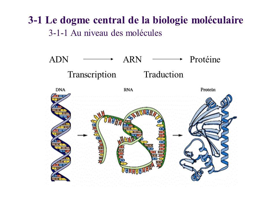ADN 3-1 Le dogme central de la biologie moléculaire ARNProtéine TranscriptionTraduction 3-1-1 Au niveau des molécules
