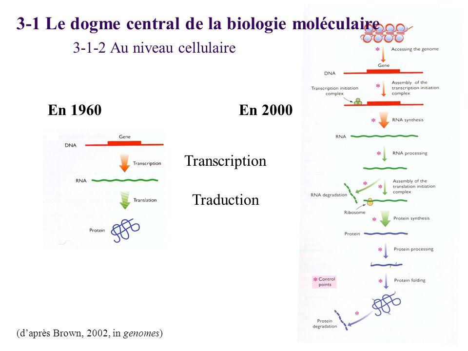 3-1 Le dogme central de la biologie moléculaire (daprès Brown, 2002, in genomes) En 1960En 2000 3-1-2 Au niveau cellulaire Transcription Traduction