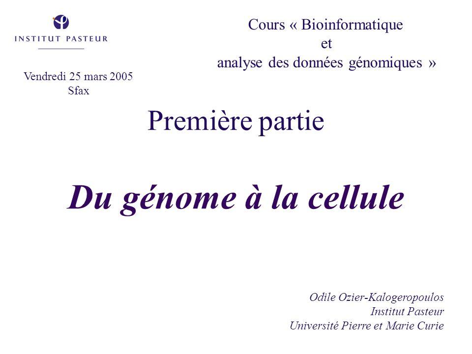 Première partie Du génome à la cellule Odile Ozier-Kalogeropoulos Institut Pasteur Université Pierre et Marie Curie Cours « Bioinformatique et analyse