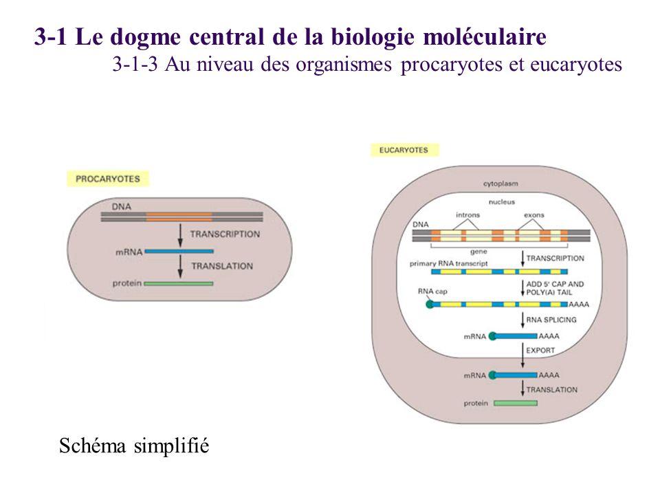 3-1-3 Au niveau des organismes procaryotes et eucaryotes Schéma simplifié 3-1 Le dogme central de la biologie moléculaire