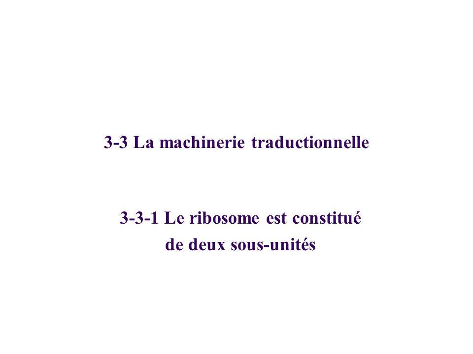 3-3 La machinerie traductionnelle 3-3-1 Le ribosome est constitué de deux sous-unités