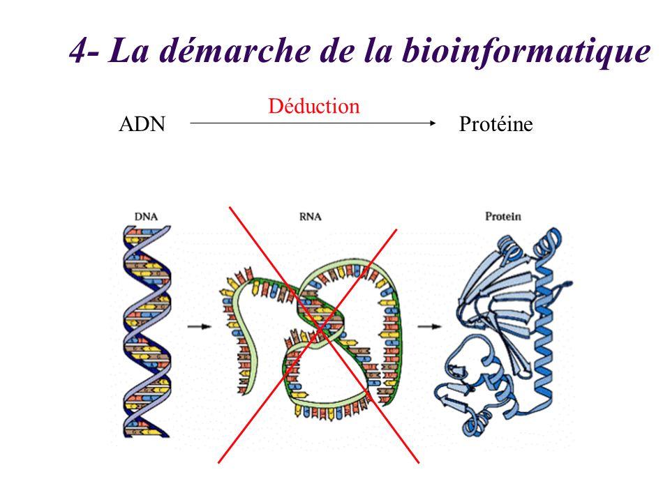 ADN 4- La démarche de la bioinformatique Protéine Déduction