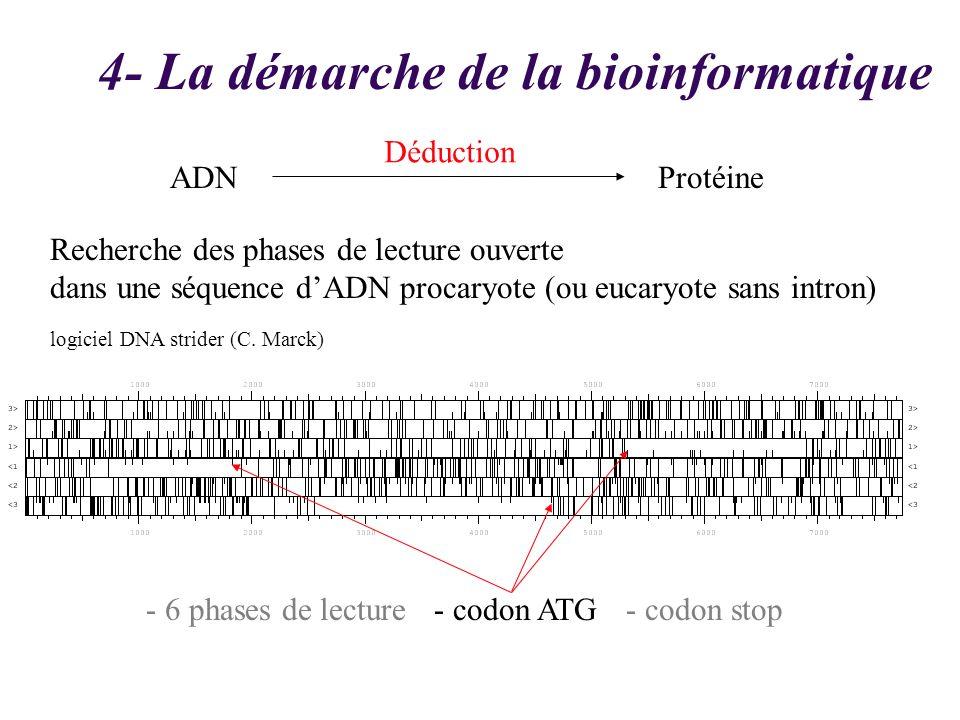 Recherche des phases de lecture ouverte dans une séquence dADN procaryote (ou eucaryote sans intron) logiciel DNA strider (C. Marck) - 6 phases de lec