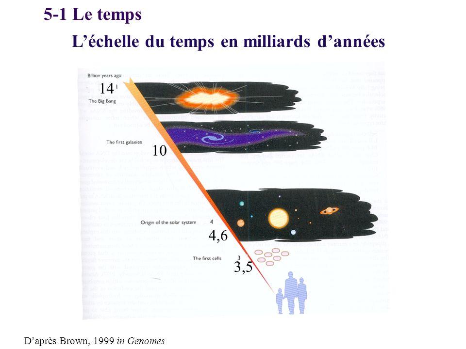 Léchelle du temps en milliards dannées 14 4,6 Daprès Brown, 1999 in Genomes 10 3,5 5-1 Le temps