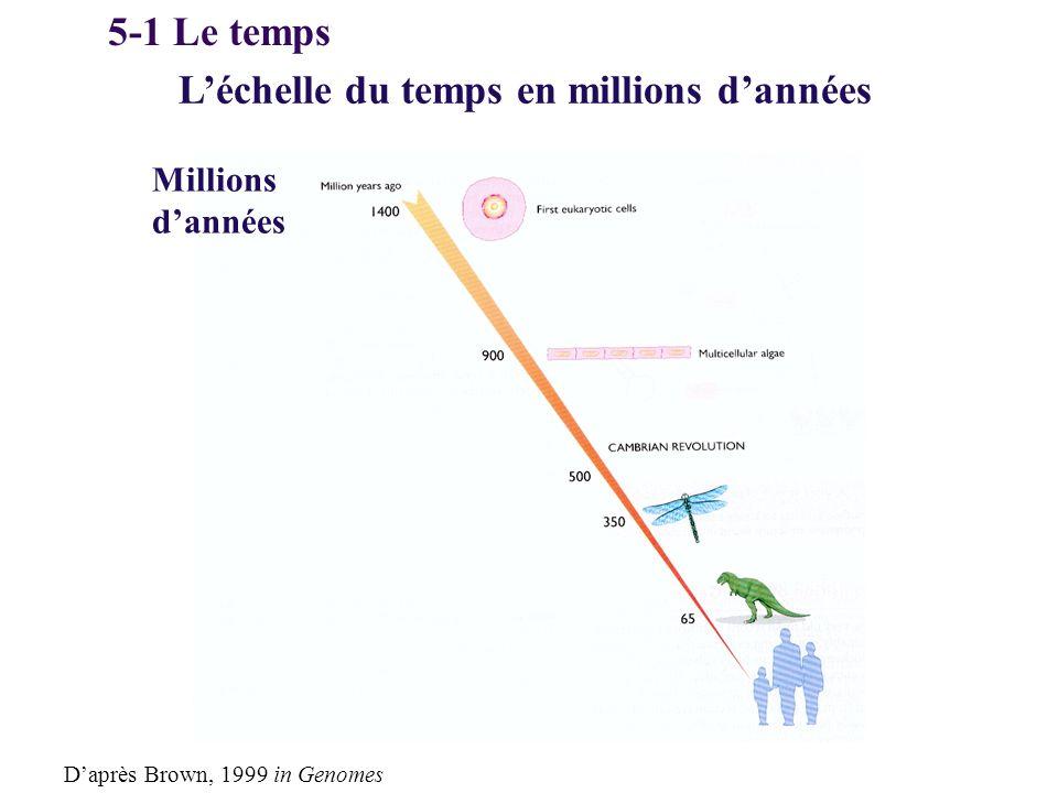 Léchelle du temps en millions dannées Millions dannées Daprès Brown, 1999 in Genomes 5-1 Le temps