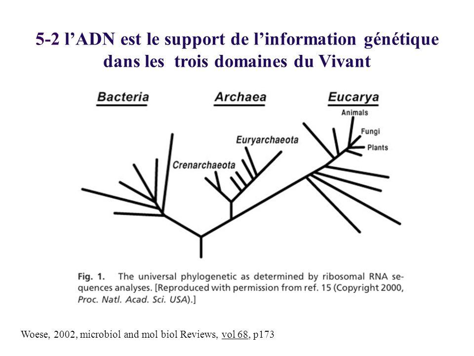 Woese, 2002, microbiol and mol biol Reviews, vol 68, p173 5-2 lADN est le support de linformation génétique dans les trois domaines du Vivant