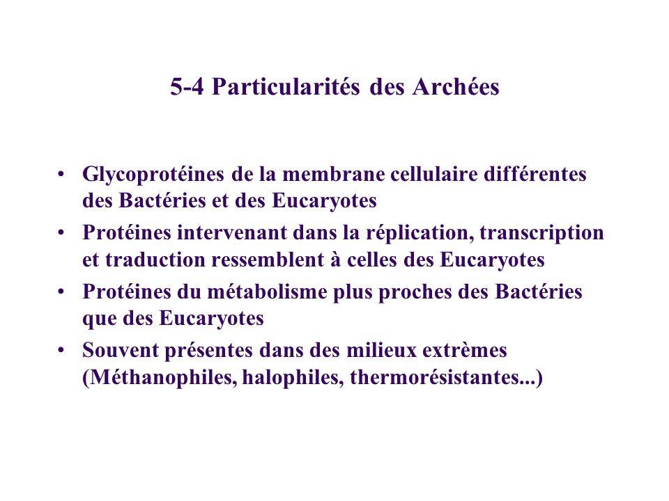 5-4 Particularités des Archées Glycoprotéines de la membrane cellulaire différentes des Bactéries et des Eucaryotes Protéines intervenant dans la répl