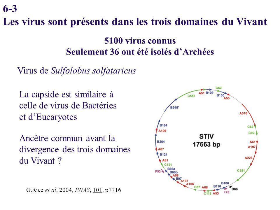 6-3 Les virus sont présents dans les trois domaines du Vivant 5100 virus connus Seulement 36 ont été isolés dArchées G.Rice et al, 2004, PNAS, 101, p7