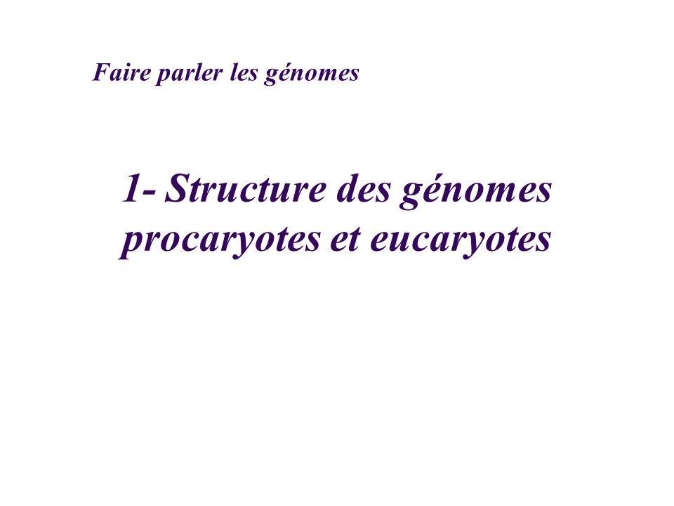 1- Structure des génomes procaryotes et eucaryotes Faire parler les génomes
