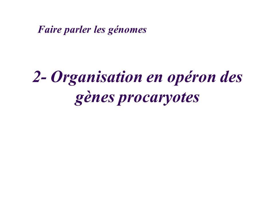 2- Organisation en opéron des gènes procaryotes Faire parler les génomes