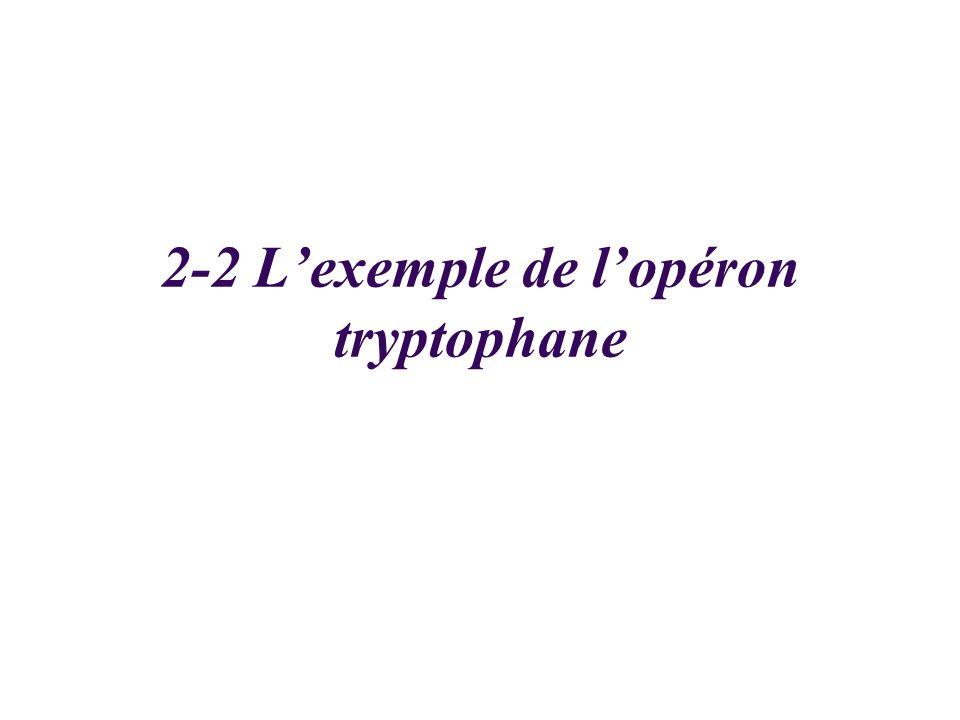 2-2 Lexemple de lopéron tryptophane