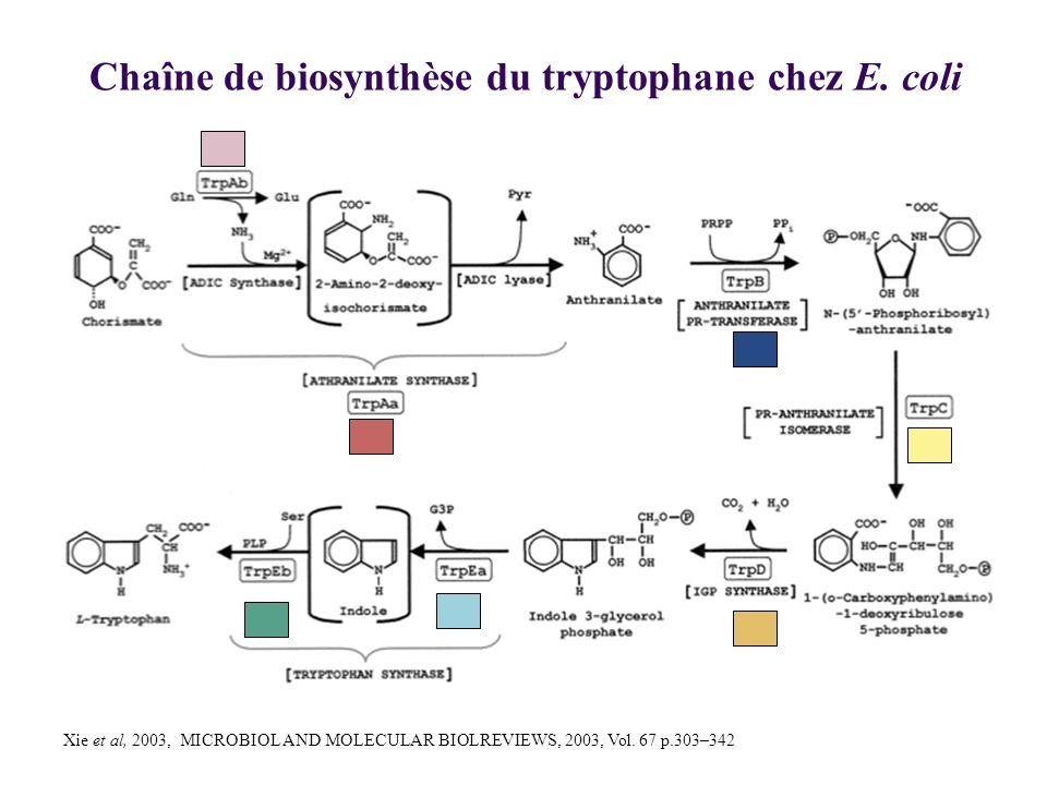 Chaîne de biosynthèse du tryptophane chez E. coli Xie et al, 2003, MICROBIOL AND MOLECULAR BIOLREVIEWS, 2003, Vol. 67 p.303–342