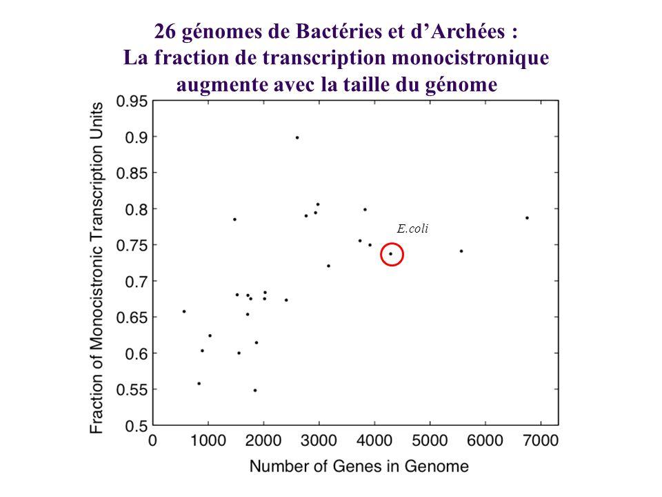 26 génomes de Bactéries et dArchées : La fraction de transcription monocistronique augmente avec la taille du génome E.coli