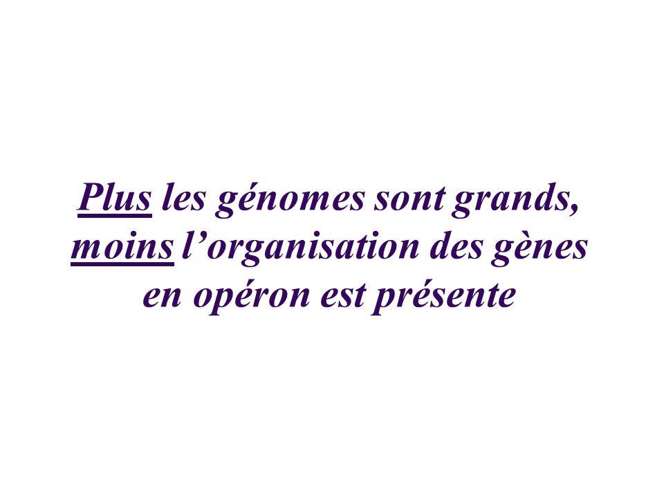 Plus les génomes sont grands, moins lorganisation des gènes en opéron est présente