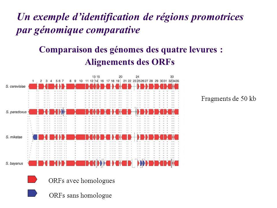 Comparaison des génomes des quatre levures : Alignements des ORFs ORFs avec homologues ORFs sans homologue Fragments de 50 kb Un exemple didentificati