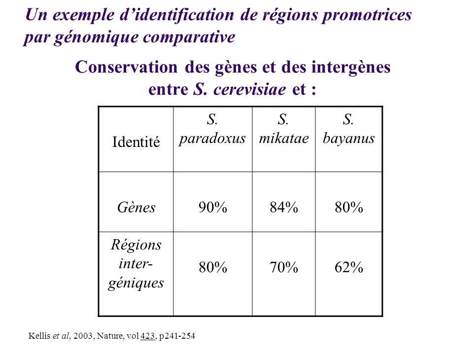 Conservation des gènes et des intergènes entre S. cerevisiae et : Identité S. paradoxus S. mikatae S. bayanus Gènes90%84%80% Régions inter- géniques 8