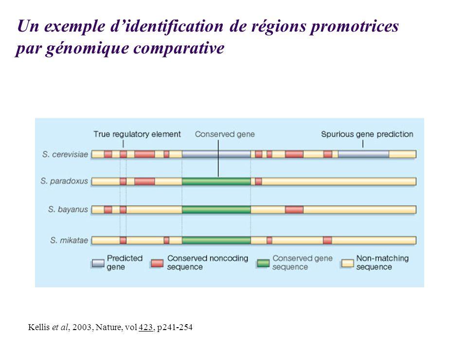 Kellis et al, 2003, Nature, vol 423, p241-254 Un exemple didentification de régions promotrices par génomique comparative