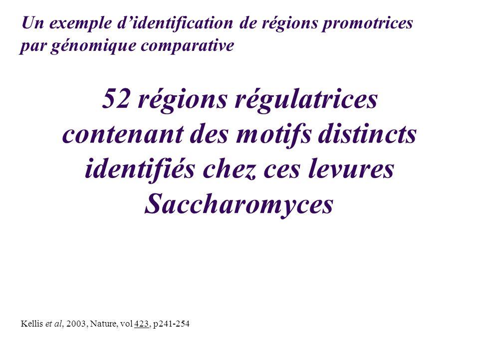 52 régions régulatrices contenant des motifs distincts identifiés chez ces levures Saccharomyces Kellis et al, 2003, Nature, vol 423, p241-254 Un exem
