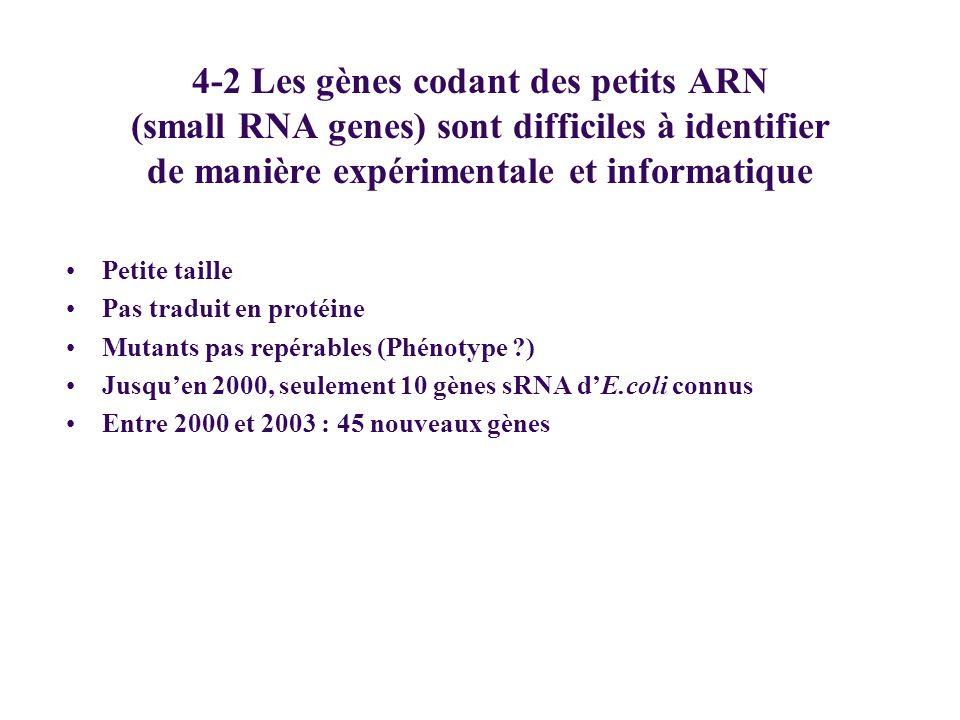 4-2 Les gènes codant des petits ARN (small RNA genes) sont difficiles à identifier de manière expérimentale et informatique Petite taille Pas traduit