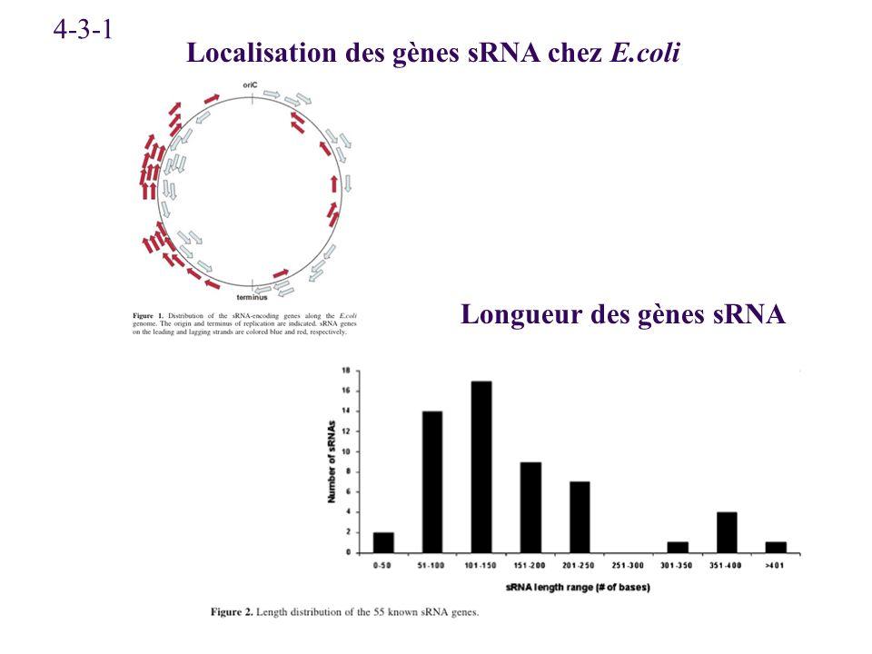 Localisation des gènes sRNA chez E.coli Longueur des gènes sRNA 4-3-1
