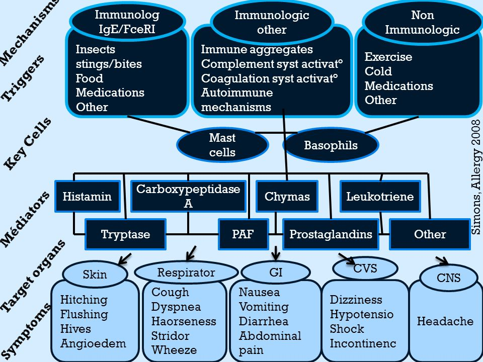 Simons, Allergy 2008 Insects stings/bites Food Medications Other Basophils Mast cells Histamin OtherTryptase Carboxypeptidase A PAF Chymas Prostagland