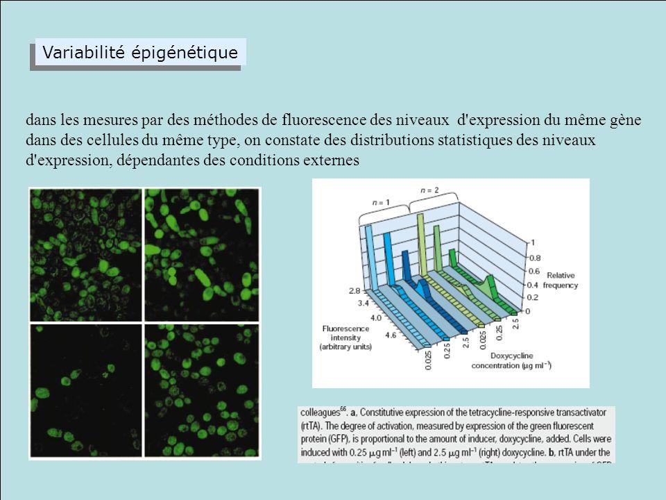 production intermittente, par paquets, des protéines