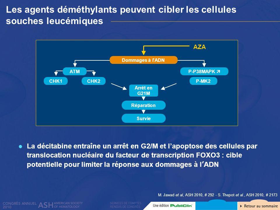 Les agents déméthylants peuvent cibler les cellules souches leucémiques La décitabine entraîne un arrêt en G2/M et lapoptose des cellules par transloc