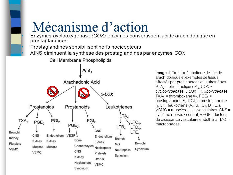 Mécanisme daction Enzymes cyclooxygénase (COX) enzymes convertissent acide arachidonique en prostaglandines Prostaglandines sensibilisent nerfs nocice