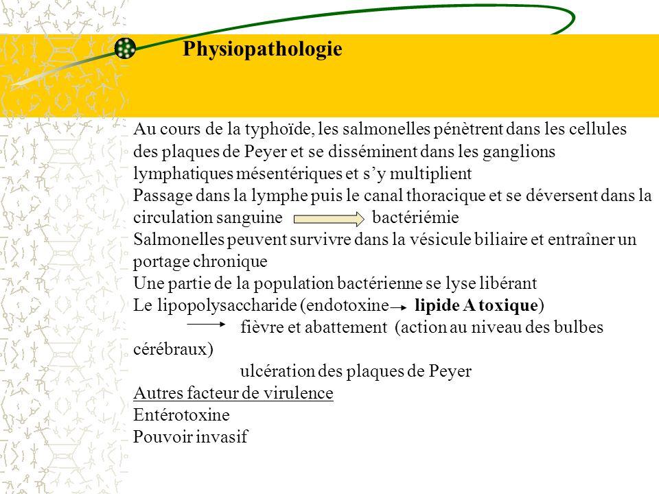 Physiopathologie Au cours de la typhoïde, les salmonelles pénètrent dans les cellules des plaques de Peyer et se disséminent dans les ganglions lympha
