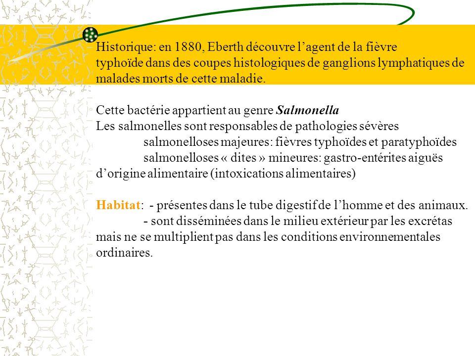 fréquence des sérotypes rencontrés en France OH1H2 S.typhimurium : 4,5 i,1,2 (groupe B) S.enteritidis : 9 g,m (groupe D) S.virchow : 6,7 r,1,2 (groupe C1) S.newport : 6,8 e,h 1,2 (groupe C2) S.infantis: 6,7 r, 1,5 (groupe C1) S.bovismorbificans 6,8 r, 1,5 (groupe C2) S.typhi *: 9, d (groupe D) S.dublin* : 9, g p (groupe D) * Recherche de lantigène Vi