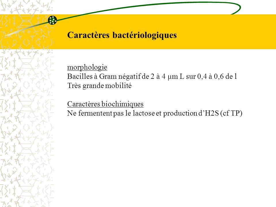 Caractères bactériologiques morphologie Bacilles à Gram négatif de 2 à 4 μm L sur 0,4 à 0,6 de l Très grande mobilité Caractères biochimiques Ne ferme
